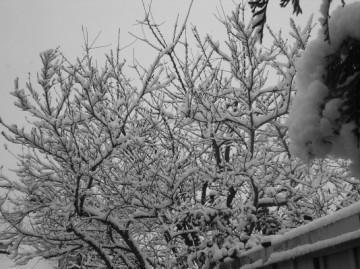 medium_neige.jpg